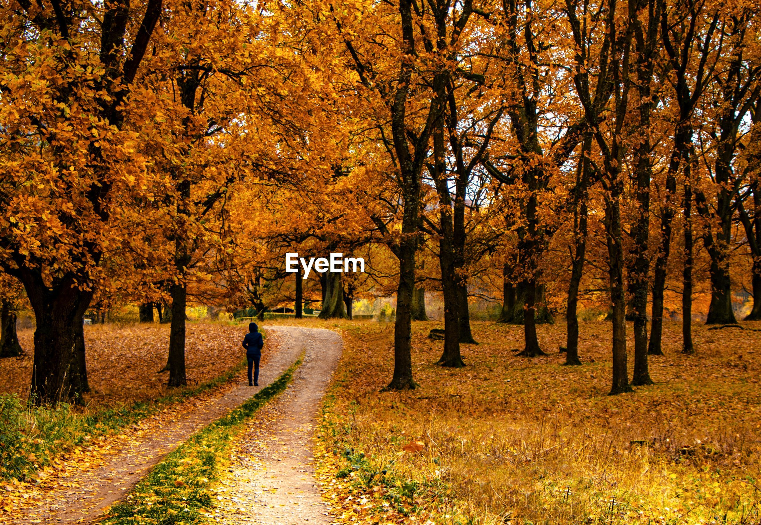 Woman standing on footpath amidst trees during autumn