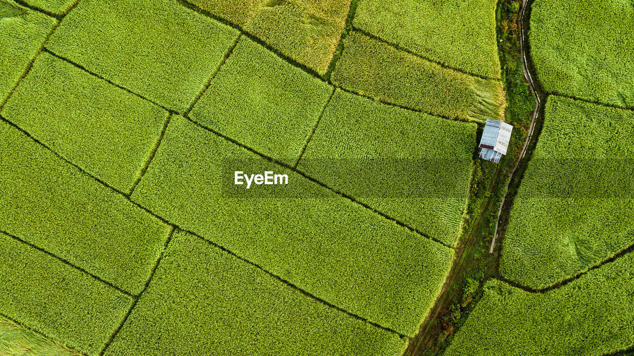 green color, full frame, plant, pattern, land, aerial view, no people, rural scene, agriculture, growth, landscape, backgrounds, environment, tranquil scene, farm, high angle view, field, nature, day, beauty in nature, outdoors