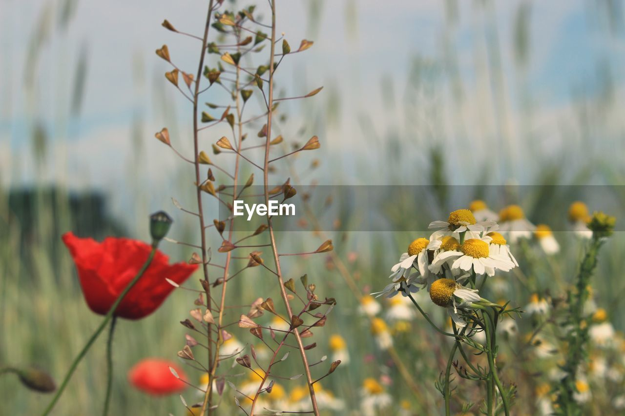 flower, nature, plant, growth, beauty in nature, petal, fragility, no people, blooming, yellow, focus on foreground, freshness, day, outdoors, flower head, close-up, sky