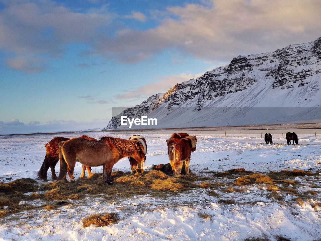 Horses On Snow Covered Landscape Against Sky
