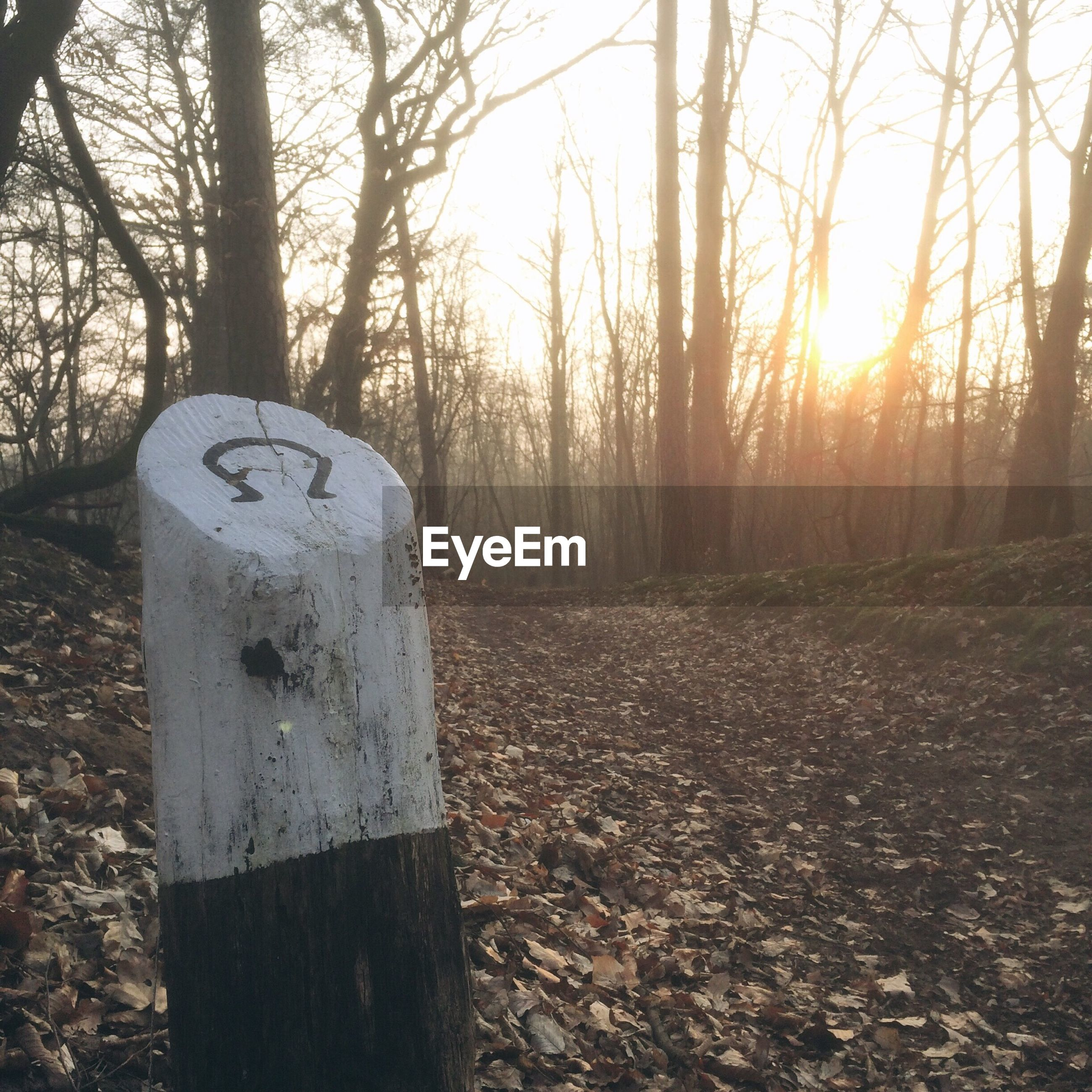 Wooden post by pathway against bare trees in forest during sunrise