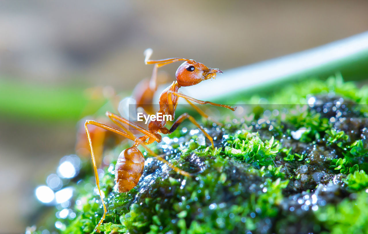 invertebrate, animal wildlife, animal themes, insect, animals in the wild, close-up, animal, one animal, selective focus, plant, green color, day, growth, no people, nature, beauty in nature, plant part, leaf, vulnerability, outdoors