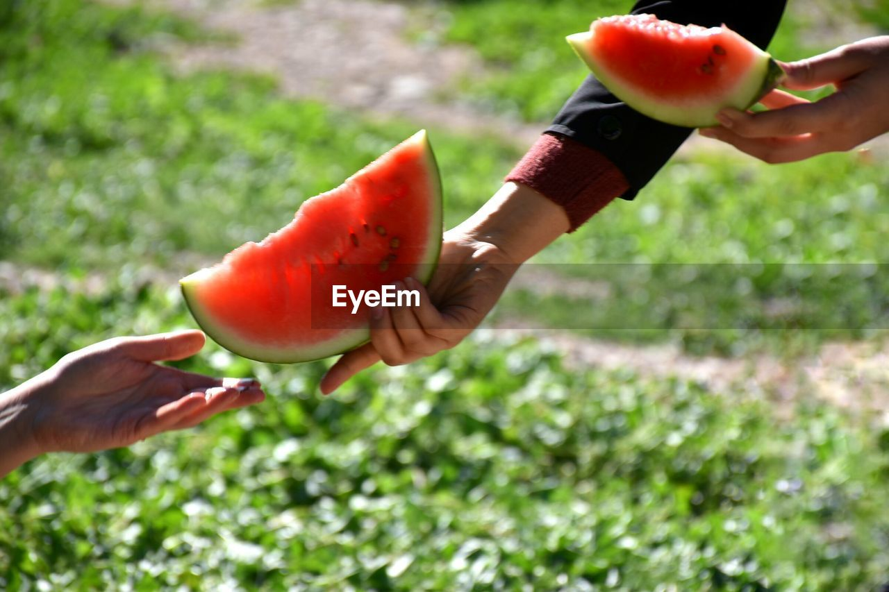 Close-Up Of Hand Handing Over Watermelon