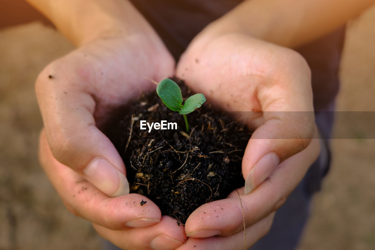 human hand, hand, holding, one person, nature, plant, human body part, growth, hands cupped, beginnings, real people, close-up, leaf, dirt, plant part, focus on foreground, lifestyles, vulnerability, fragility, new life, care, outdoors, gardening, finger, planting
