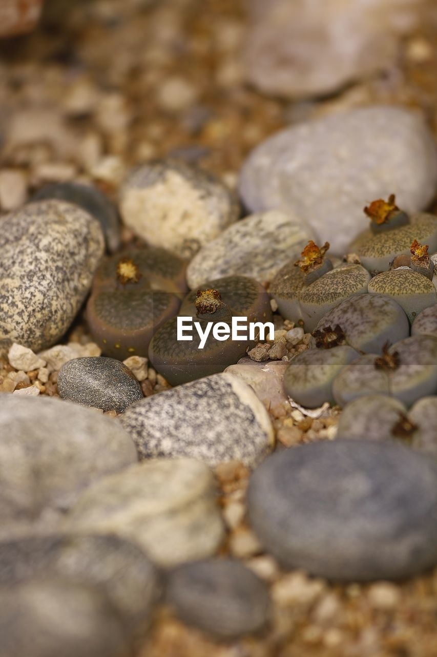 beach, nature, selective focus, close-up, no people, pebble, full frame, textured, outdoors, day, pebble beach, backgrounds, beauty in nature