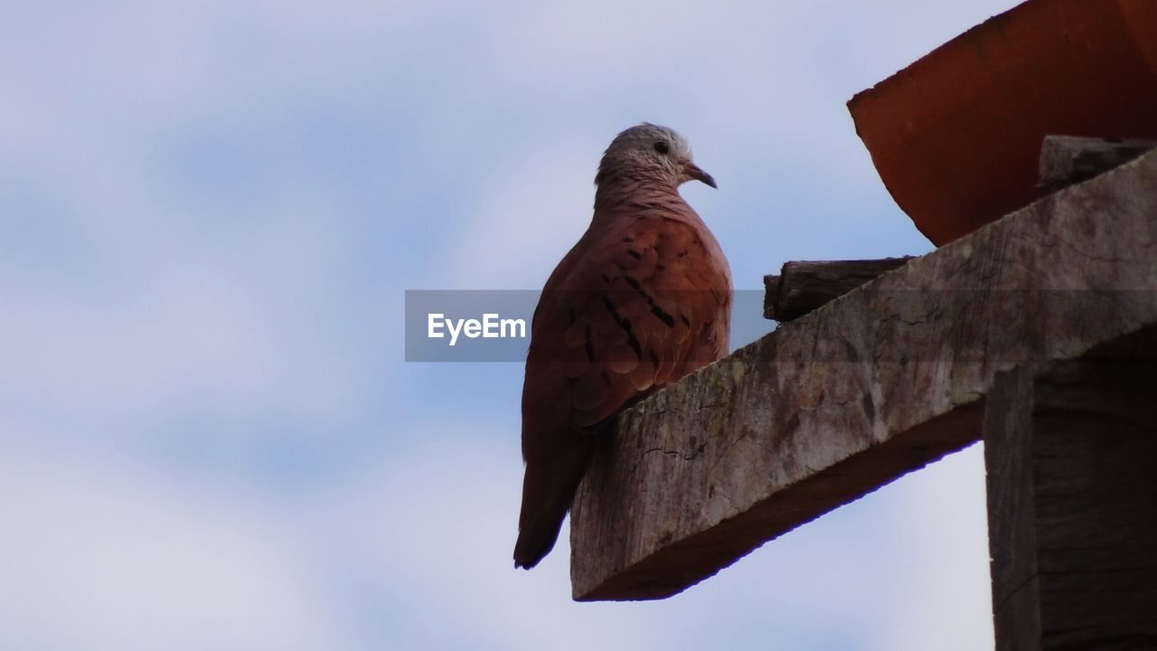 bird, vertebrate, animals in the wild, sky, low angle view, animal, animal themes, animal wildlife, one animal, perching, nature, no people, day, architecture, focus on foreground, roof, outdoors, built structure, pigeon, cloud - sky