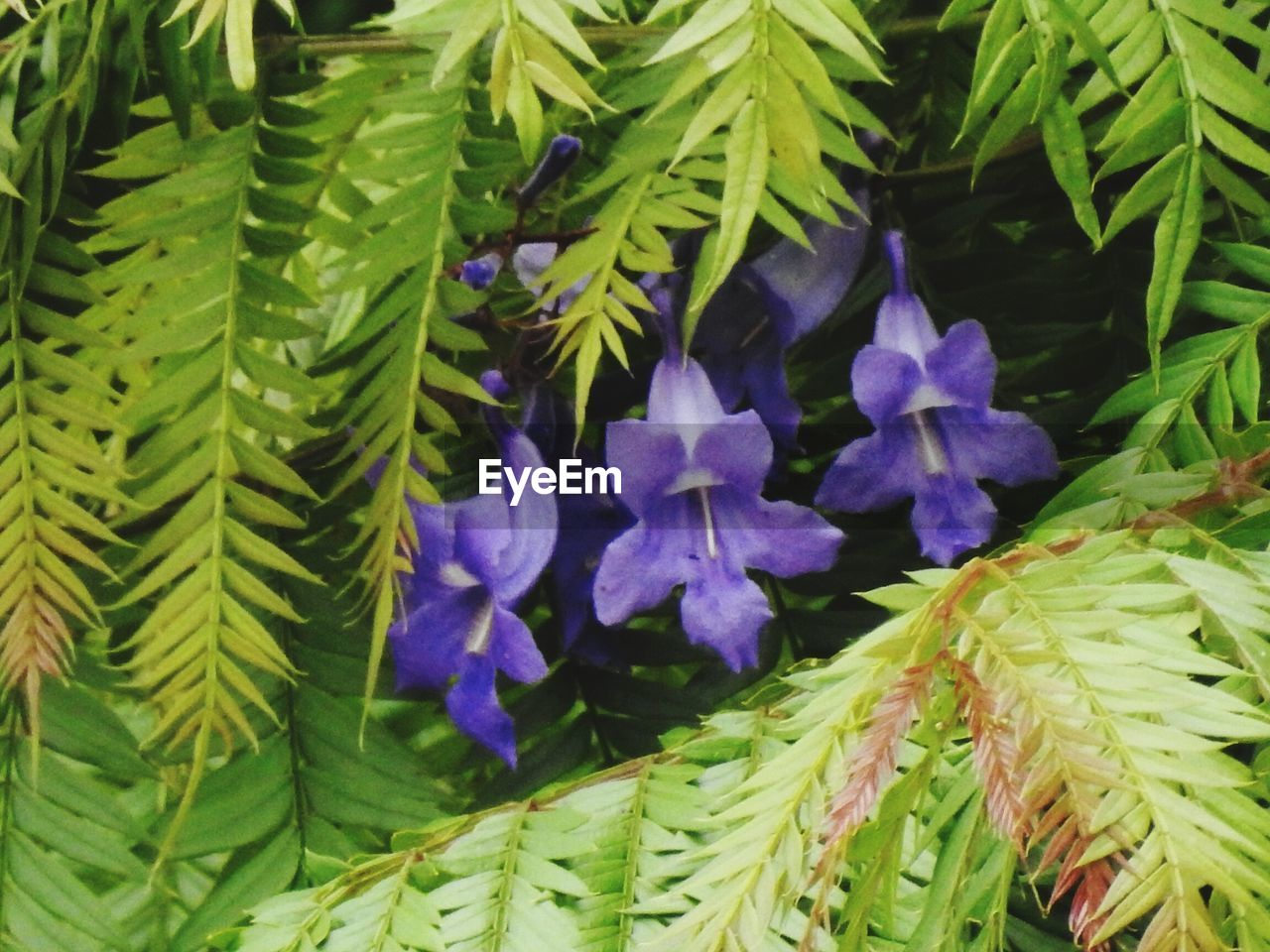 growth, plant, leaf, beauty in nature, nature, green color, purple, flower, fragility, freshness, no people, close-up, day, outdoors, flower head
