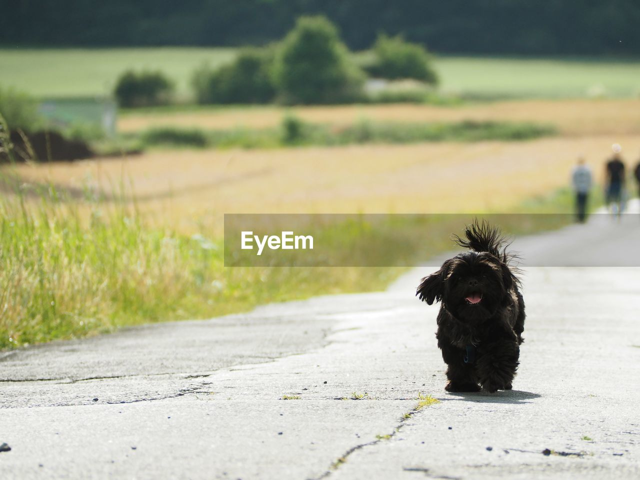 one animal, animal, mammal, animal themes, dog, canine, domestic, pets, domestic animals, vertebrate, field, nature, day, black color, focus on foreground, land, portrait, plant, road, looking at camera, outdoors