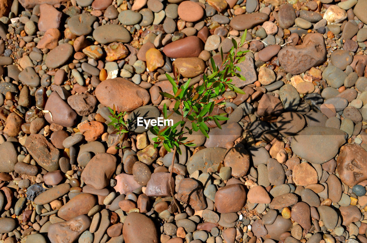 pebble, nature, rock - object, full frame, backgrounds, plant, textured, no people, close-up, outdoors, beauty in nature, day, fragility, freshness