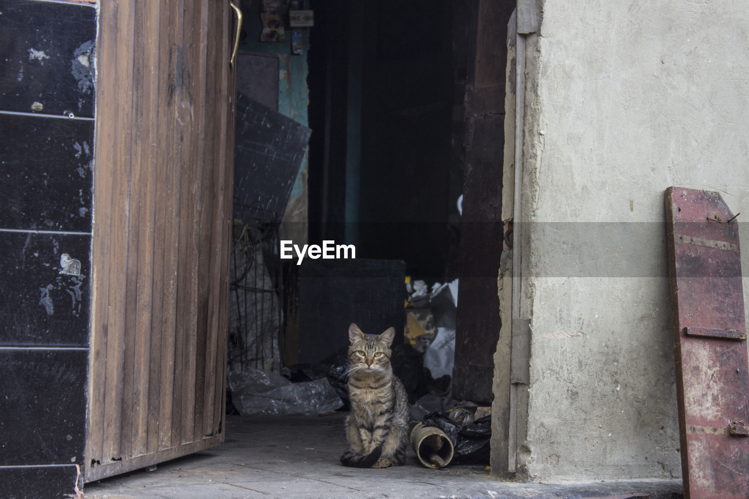 Stray cat sitting in doorway of abandoned building