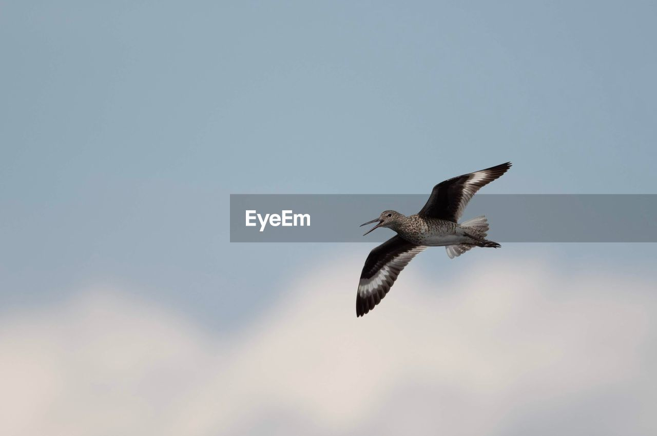 flying, animals in the wild, animal wildlife, bird, vertebrate, animal themes, animal, spread wings, sky, low angle view, mid-air, one animal, clear sky, nature, no people, motion, day, copy space, outdoors, beauty in nature, seagull