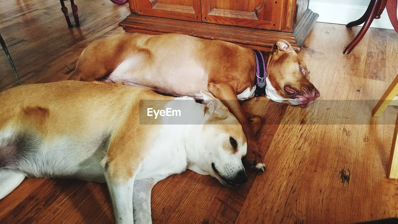 dog, pets, domestic animals, mammal, home interior, indoors, animal themes, high angle view, hardwood floor, no people, relaxation, lying down, togetherness, close-up, day