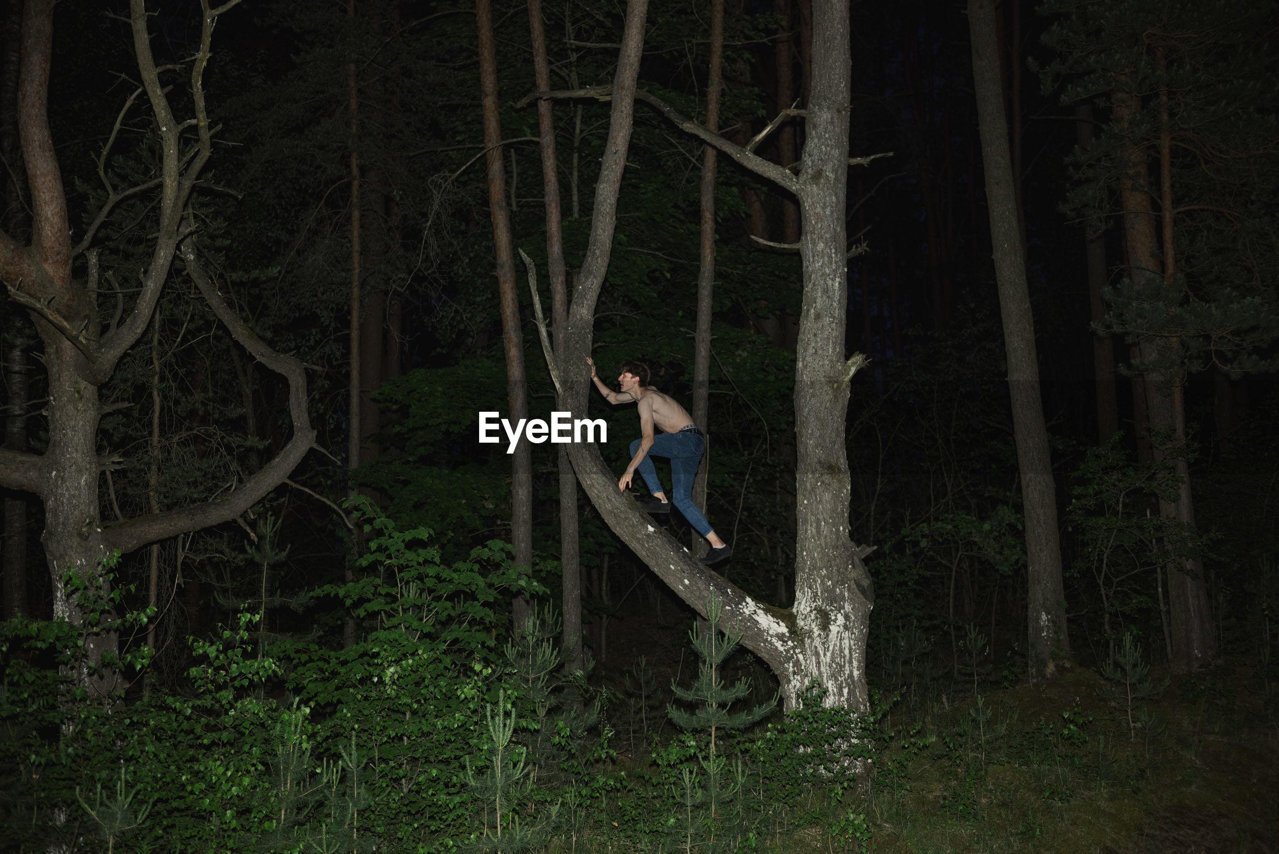 Shirtless young man climbing on tree during night