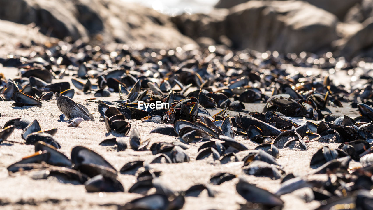 Close-Up Of Mussel Shells On Sand