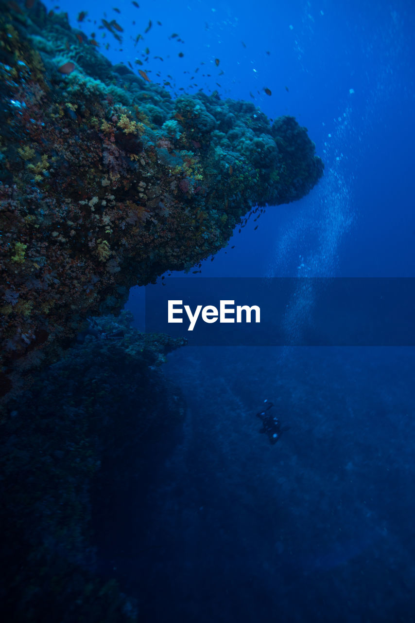 Person scuba diving at undersea