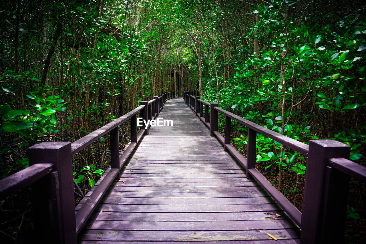 plant, tree, direction, railing, the way forward, forest, bridge, connection, land, tranquility, nature, wood - material, growth, footbridge, no people, lush foliage, foliage, beauty in nature, diminishing perspective, day, outdoors, bridge - man made structure, wood, woodland, bamboo - plant, long