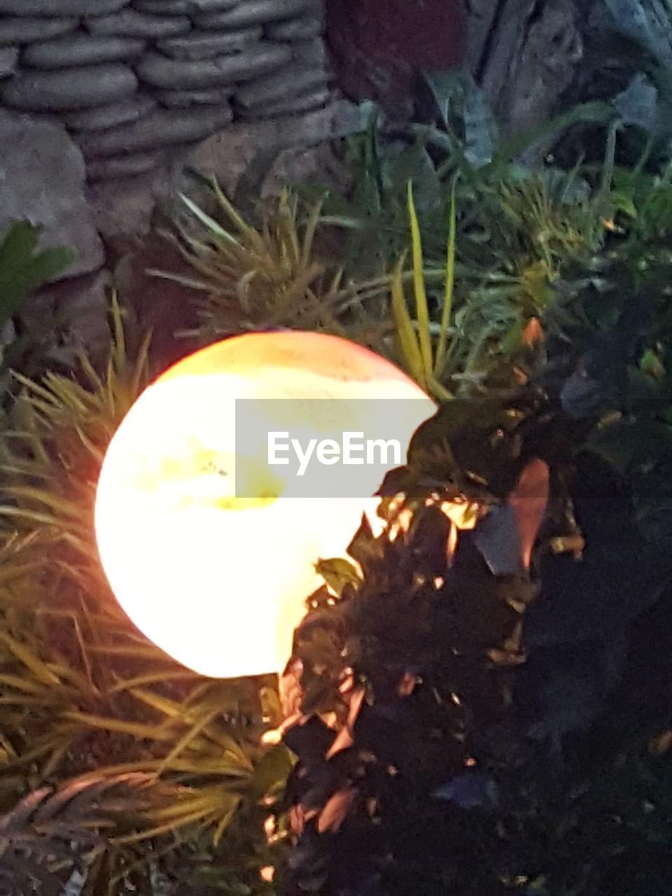 illuminated, no people, flame, close-up, burning, night, outdoors, leaf, light bulb