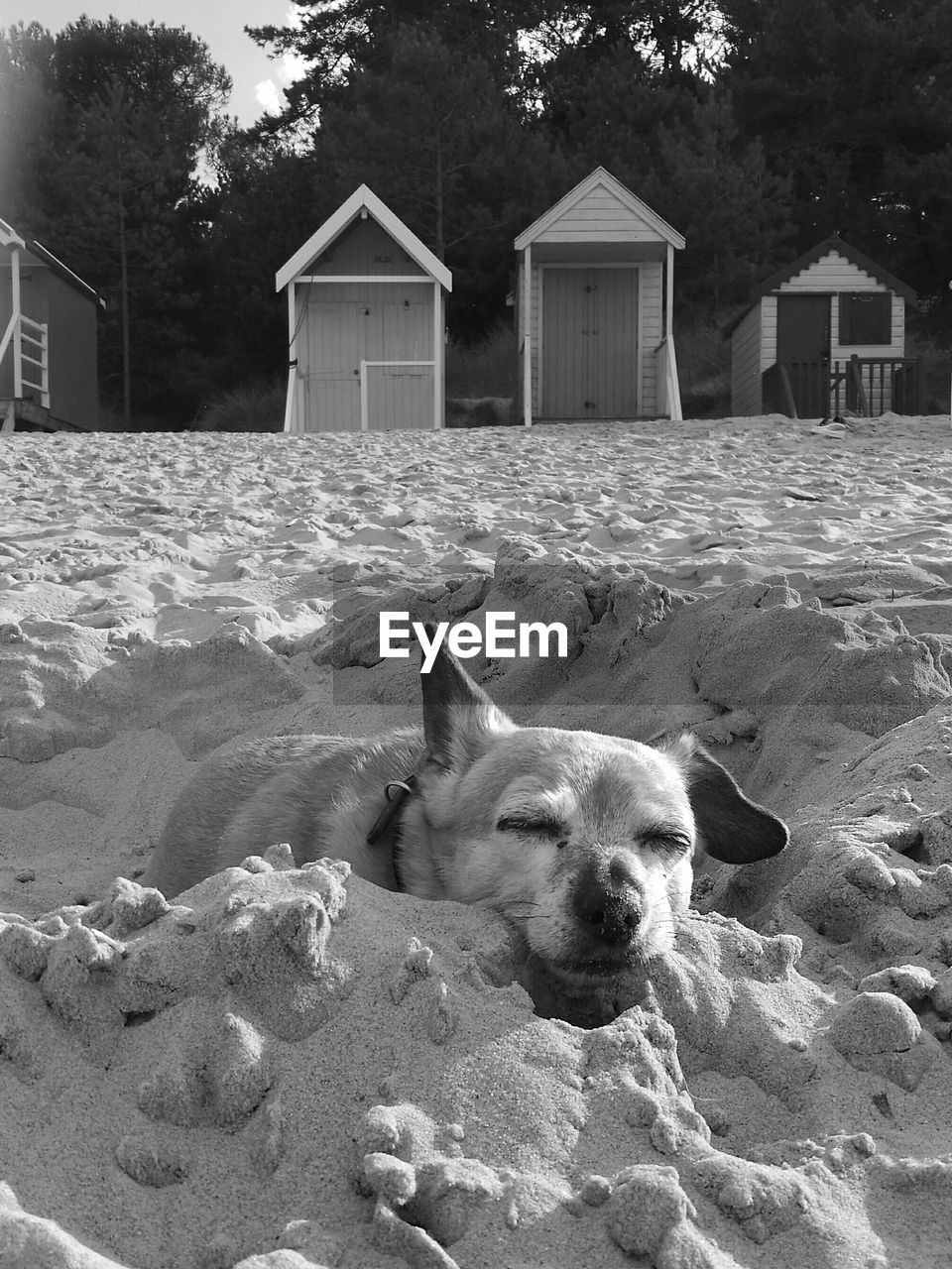 domestic animals, pets, animal themes, mammal, one animal, dog, outdoors, architecture, portrait, day, no people, built structure, building exterior, sand, lying down, looking at camera, nature, close-up, sky