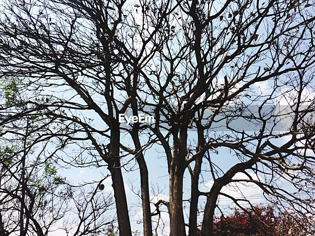 tree, branch, bare tree, low angle view, nature, outdoors, no people, beauty in nature, tranquility, scenics, day, tree trunk, landscape, sky
