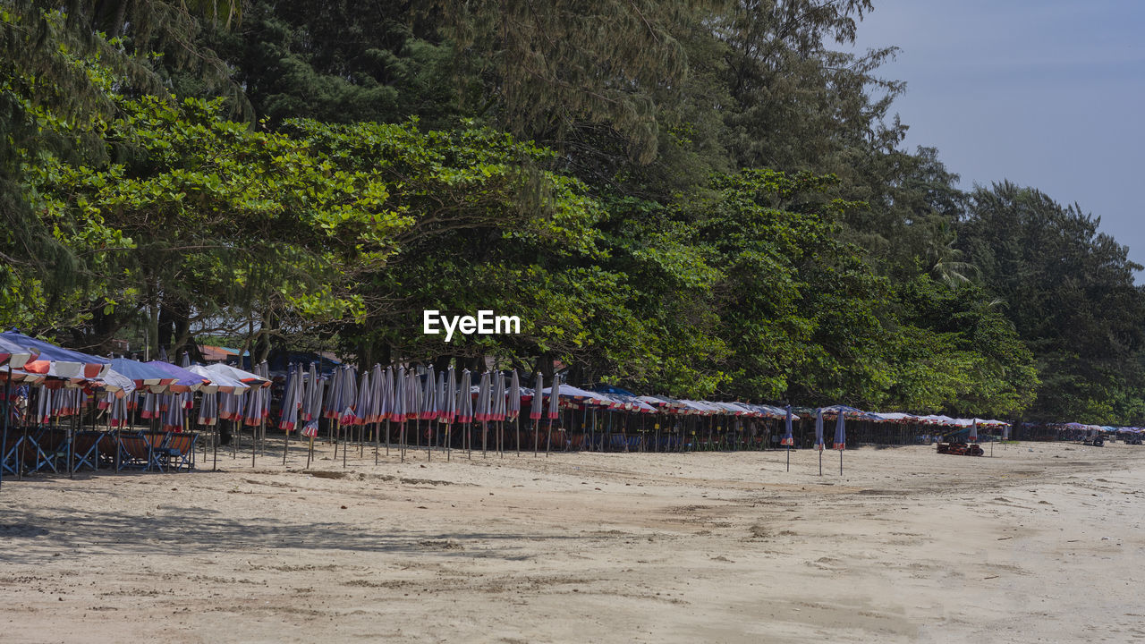 Trees by parasols at beach