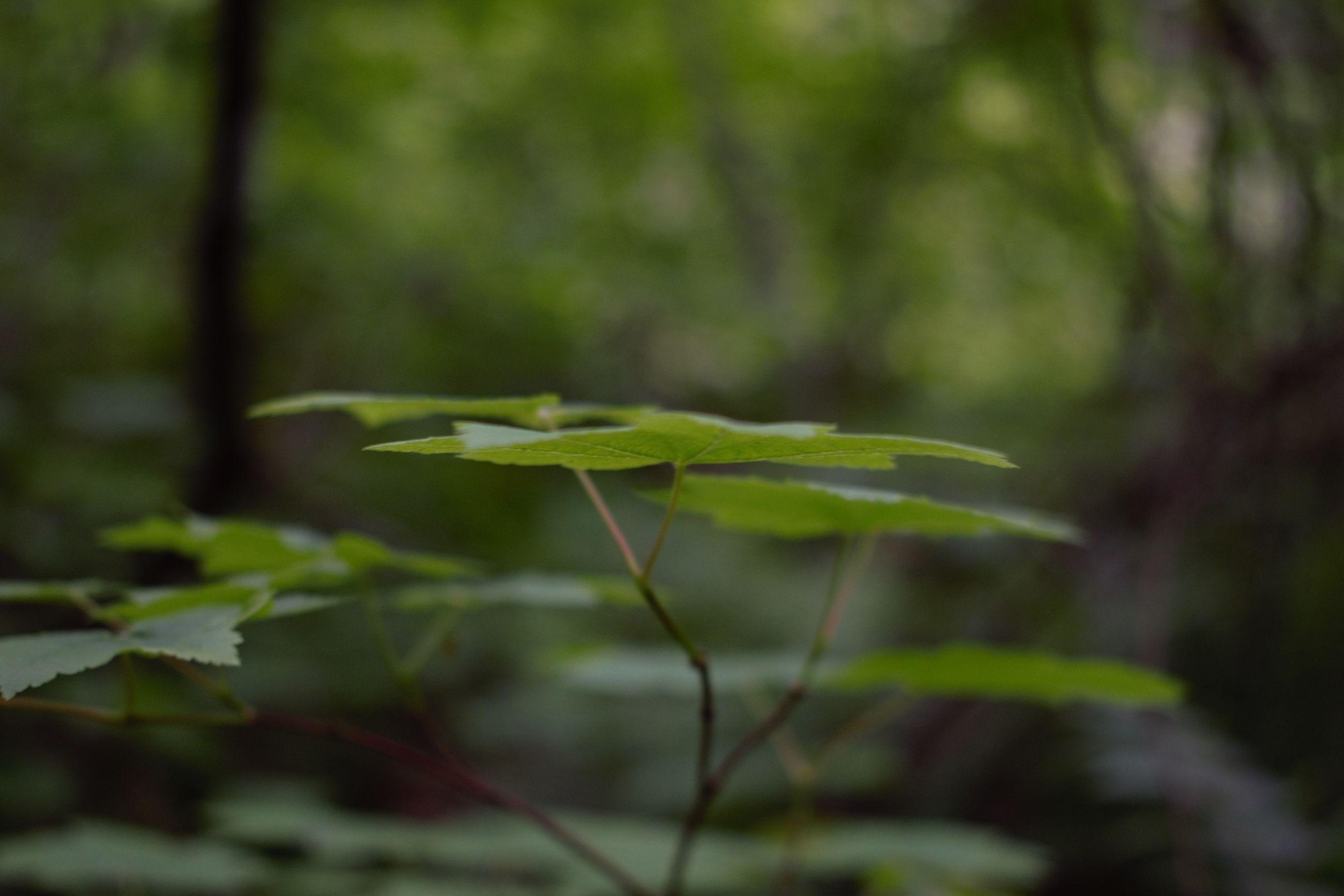 Close-up of leaf on land