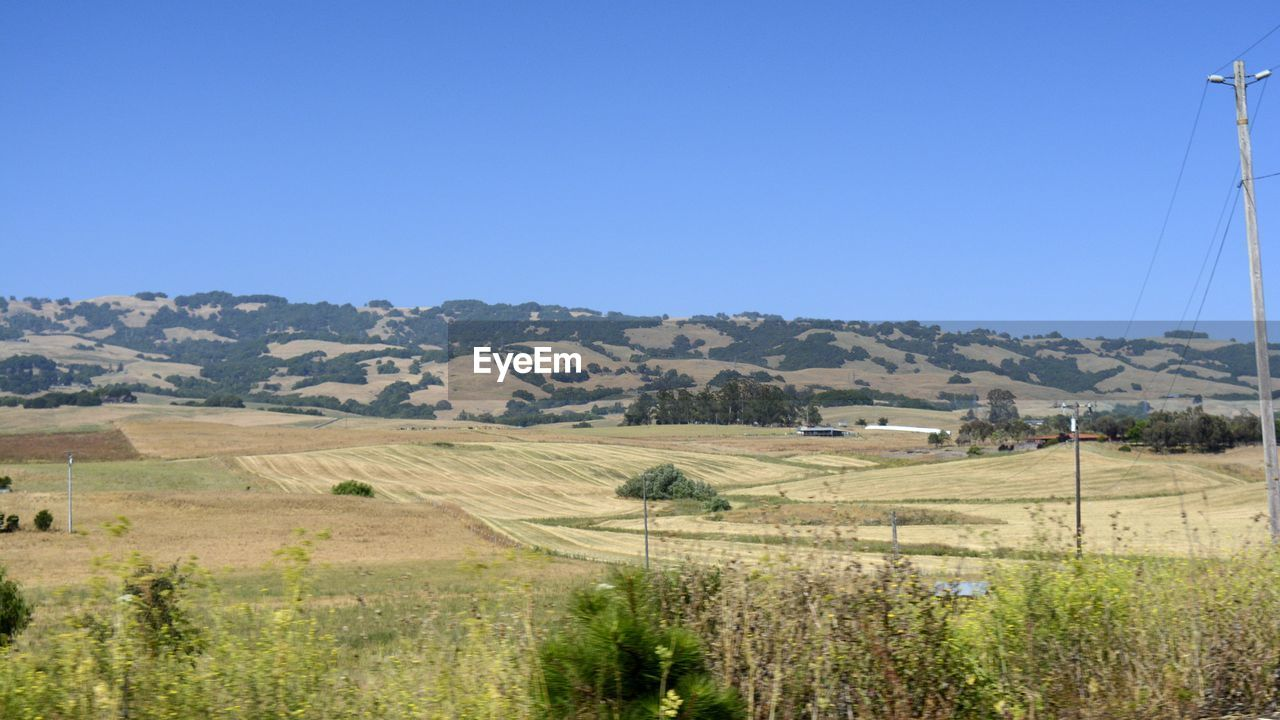 SCENIC VIEW OF FARM AGAINST CLEAR SKY