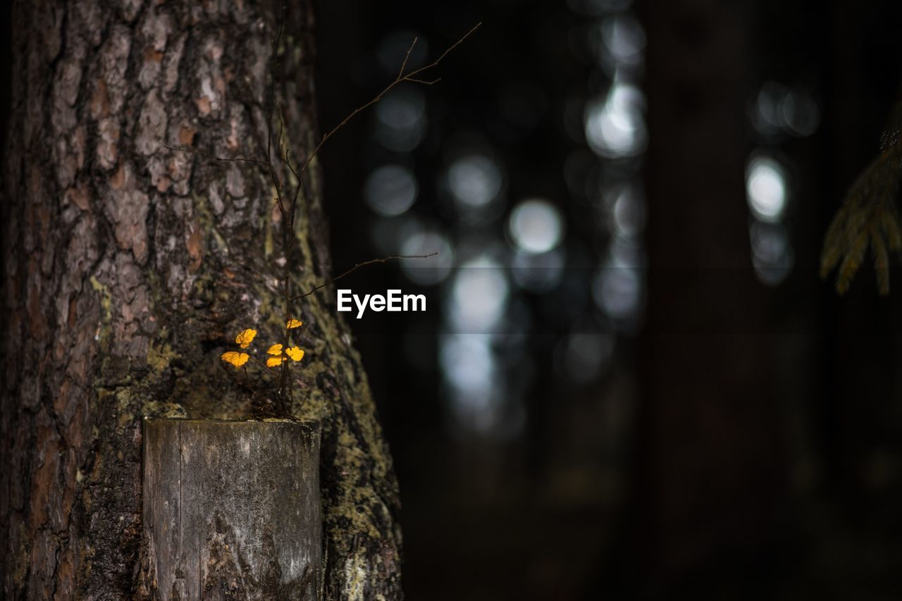 Close-Up Of Tree In Forest At Night