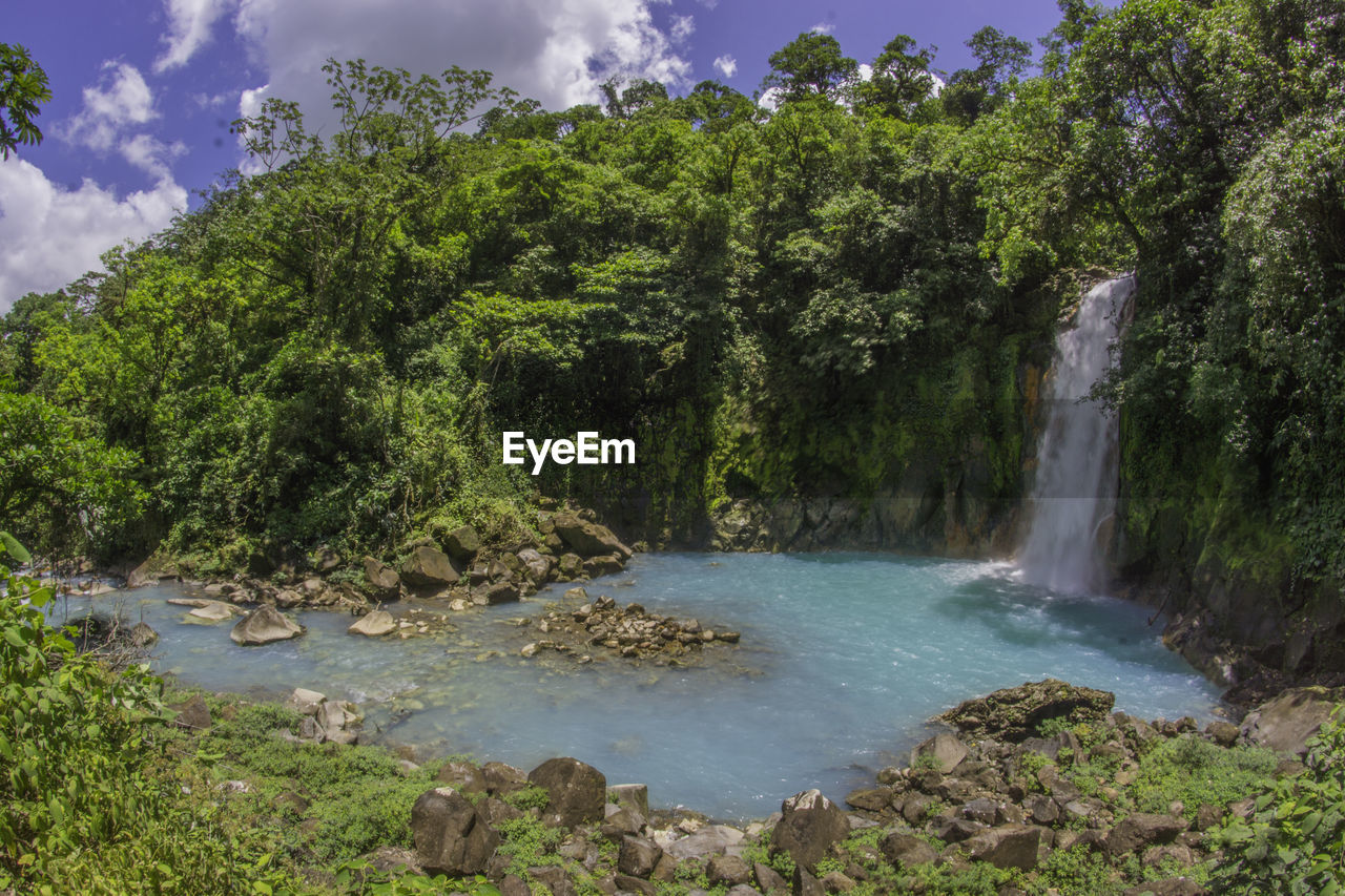plant, tree, water, beauty in nature, scenics - nature, nature, forest, growth, green color, tranquility, environment, waterfall, tranquil scene, sky, lush foliage, land, foliage, no people, day, outdoors, rainforest, flowing water, flowing, power in nature