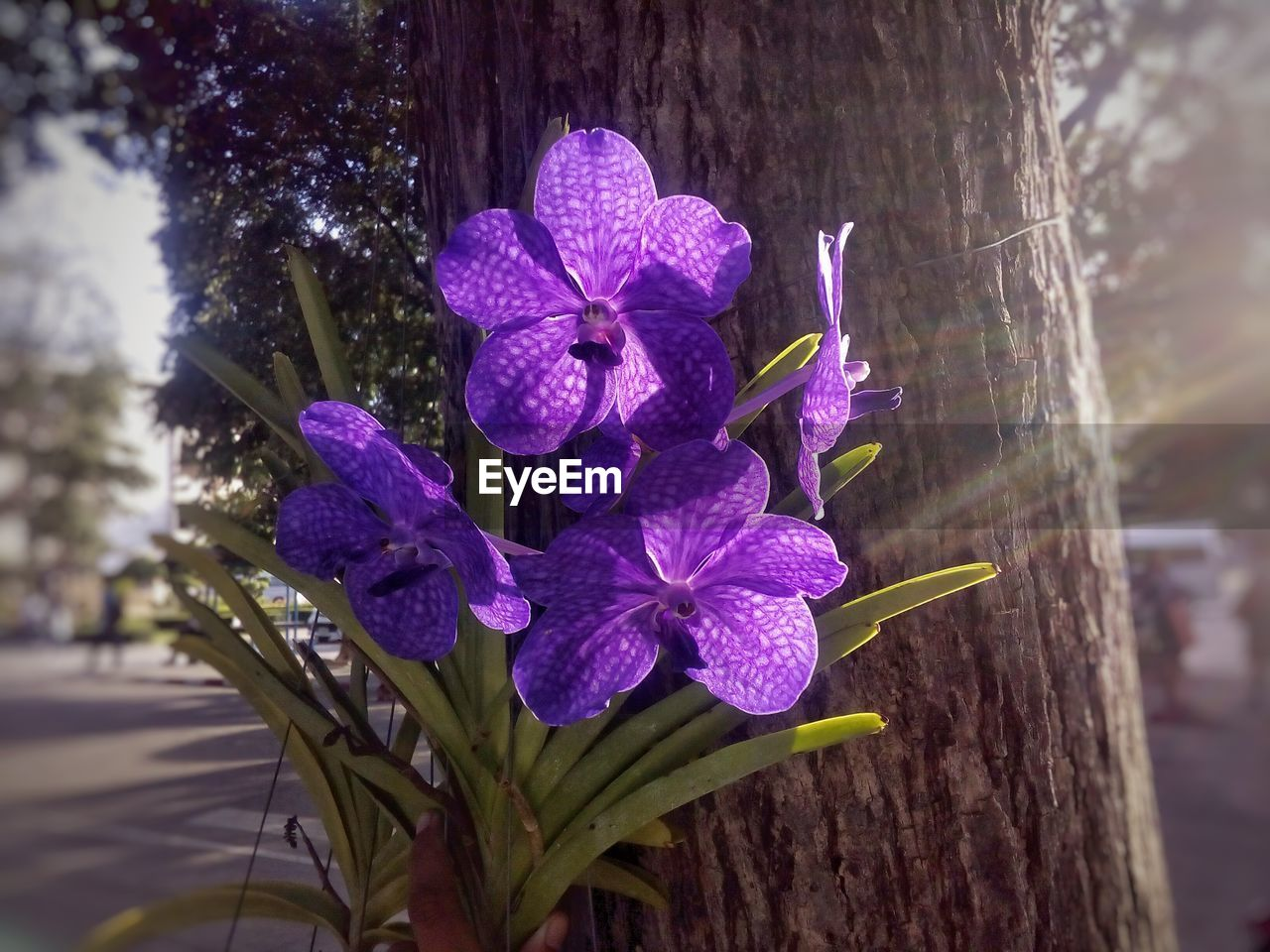 flower, beauty in nature, fragility, growth, purple, nature, petal, outdoors, day, freshness, focus on foreground, close-up, no people, flower head, blooming, tree