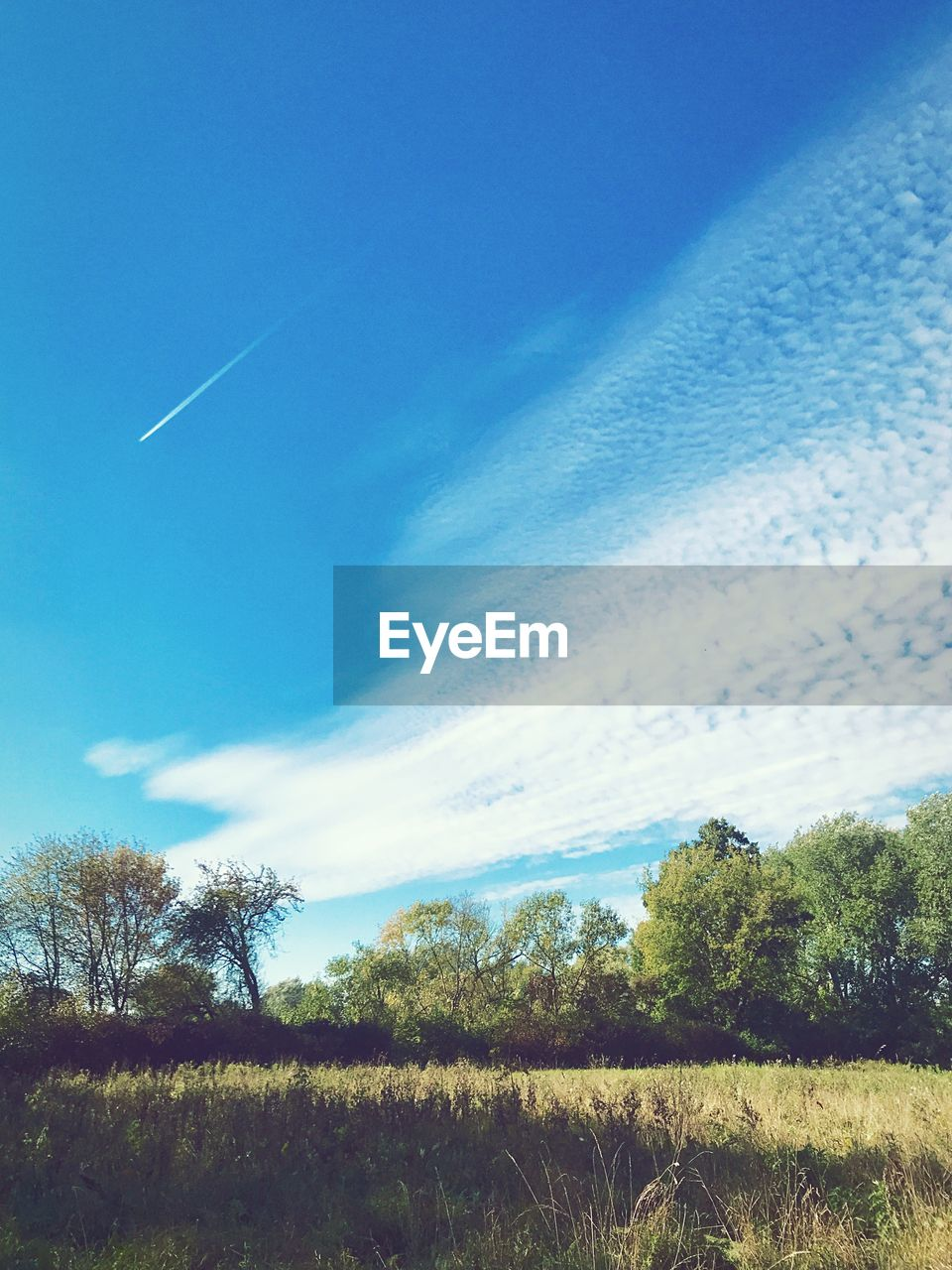 sky, cloud - sky, plant, tree, tranquility, tranquil scene, beauty in nature, vapor trail, nature, no people, scenics - nature, blue, day, landscape, land, field, non-urban scene, environment, growth, low angle view, outdoors