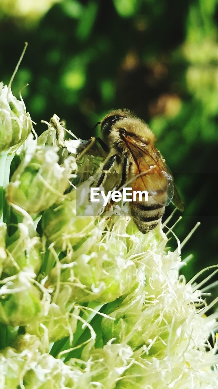 insect, one animal, animal themes, animals in the wild, flower, bee, close-up, plant, no people, nature, focus on foreground, freshness, day, animal wildlife, fragility, outdoors, beauty in nature, growth, pollination, flower head