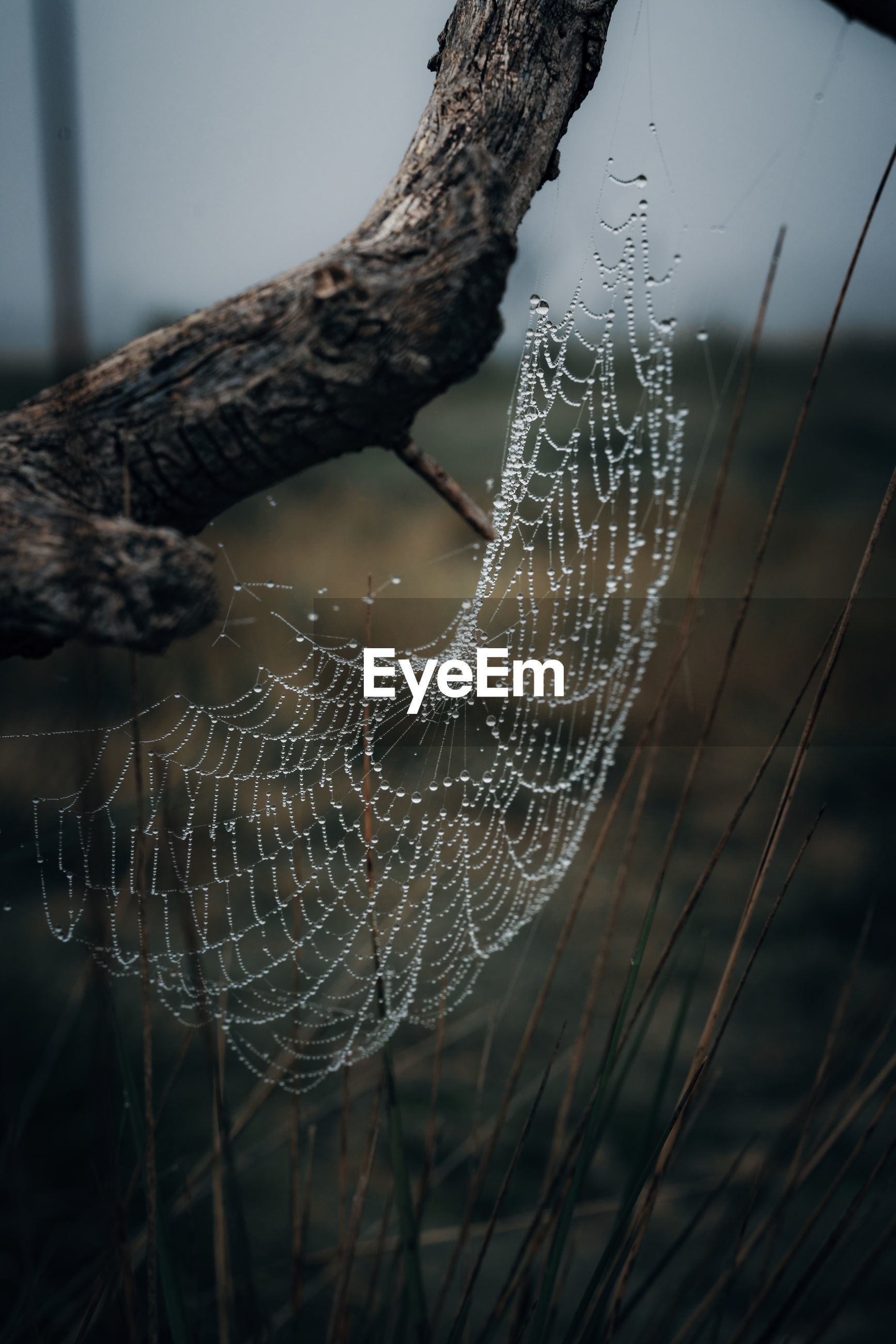 CLOSE-UP OF WET SPIDER WEB ON A PLANT