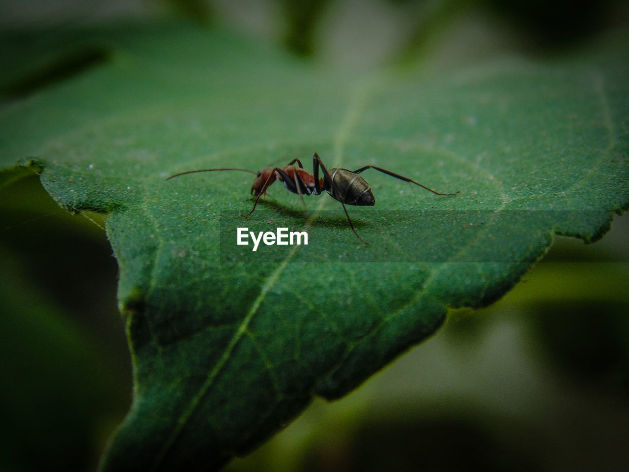 plant part, leaf, invertebrate, green color, insect, close-up, animal wildlife, one animal, animal, selective focus, animal themes, animals in the wild, no people, nature, day, plant, outdoors, focus on foreground, zoology, arthropod