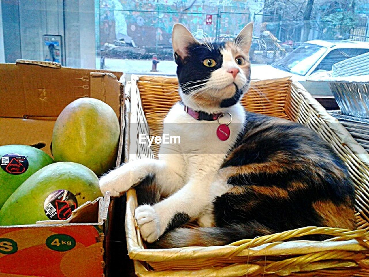 animal themes, animal, domestic, pets, mammal, one animal, domestic animals, domestic cat, cat, vertebrate, feline, sitting, no people, seat, whisker, day, basket, portrait, looking at camera, chair