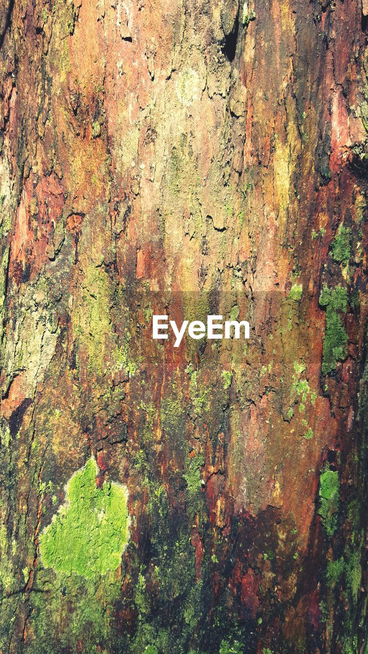 textured, rough, tree trunk, tree, full frame, backgrounds, day, lichen, nature, growth, leaf, no people, moss, close-up, bark, outdoors, rock face, beauty in nature