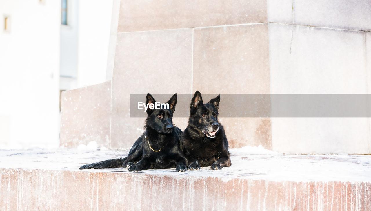 Dog sitting on wall