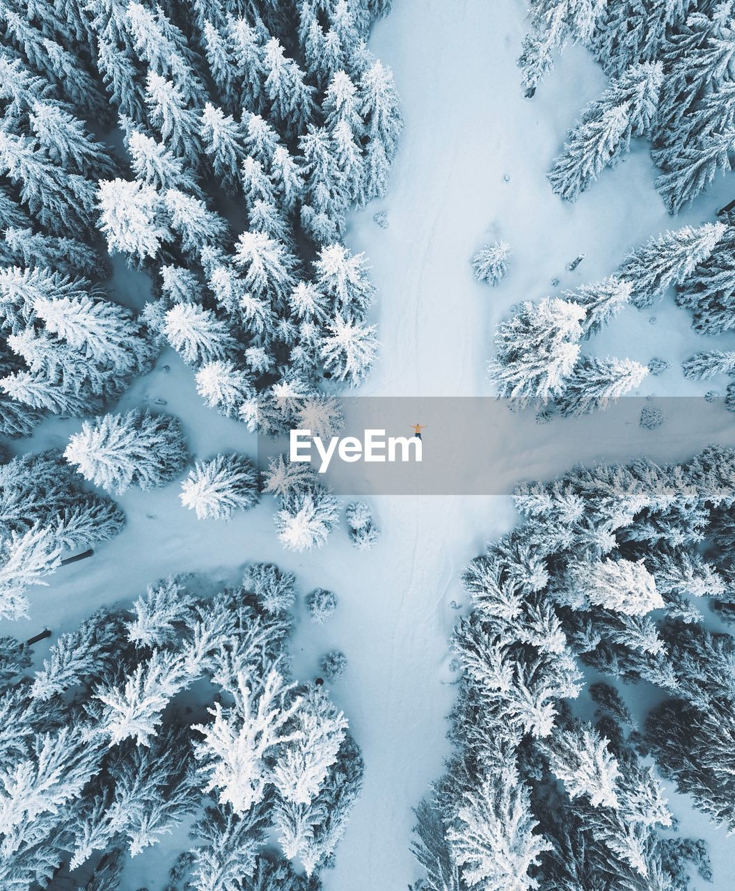 cold temperature, winter, snow, plant, tree, beauty in nature, nature, white color, day, covering, frozen, no people, land, tranquility, growth, scenics - nature, outdoors, high angle view, field, coniferous tree, powder snow