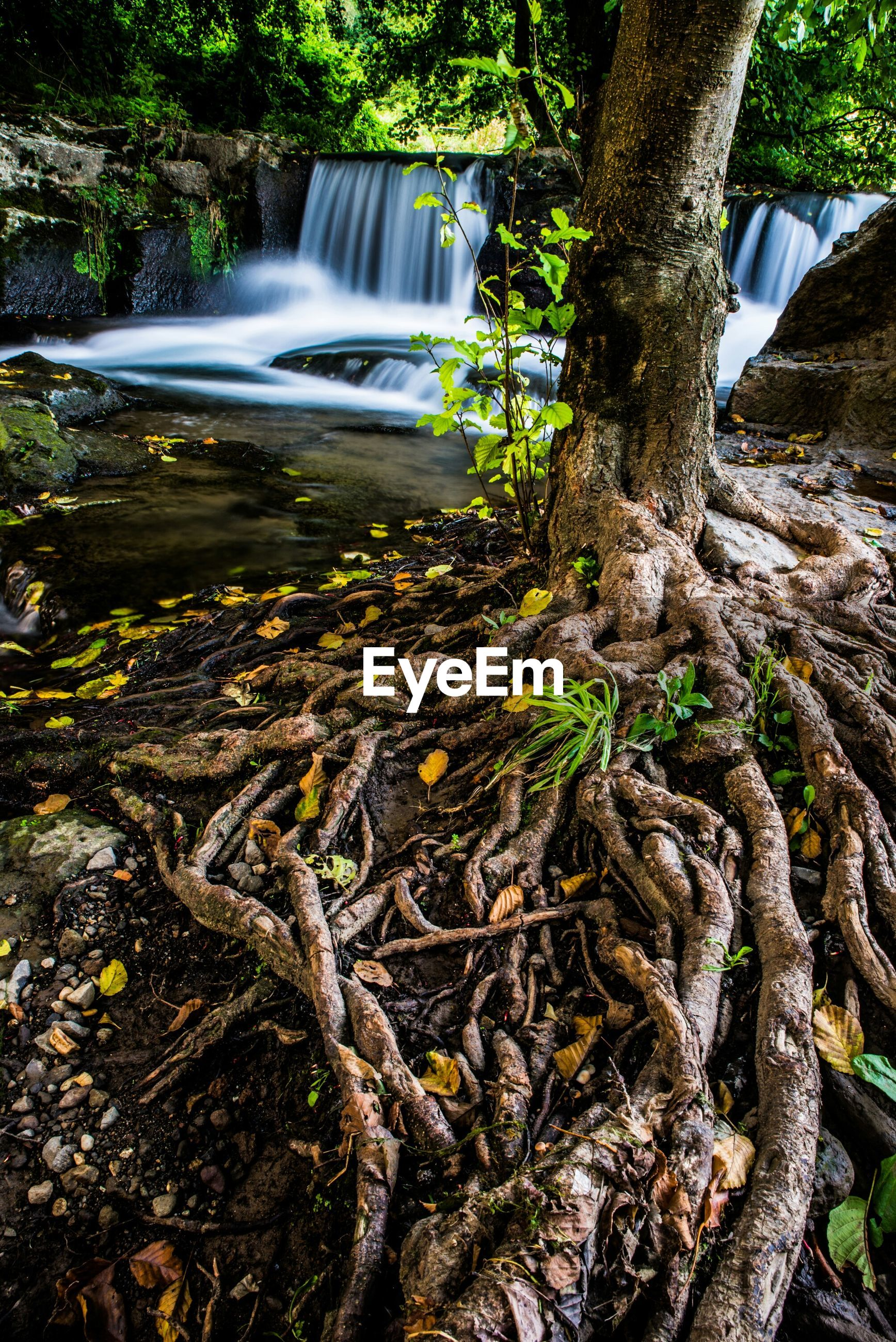 tree, forest, waterfall, flowing water, motion, nature, tree trunk, flowing, long exposure, day, stream, rock - object, outdoors, beauty in nature, no people, growth, tranquility, scenics, sunlight, water