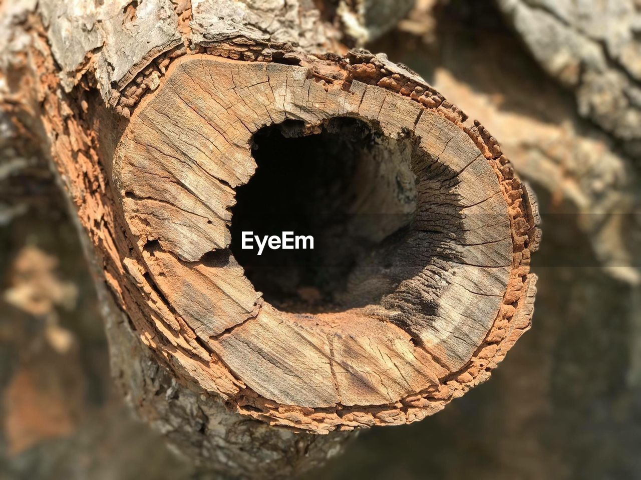 tree, close-up, wood - material, textured, day, wood, bark, nature, log, no people, tree stump, timber, focus on foreground, forest, outdoors, tree trunk, brown, rough, deforestation, circle, tree ring
