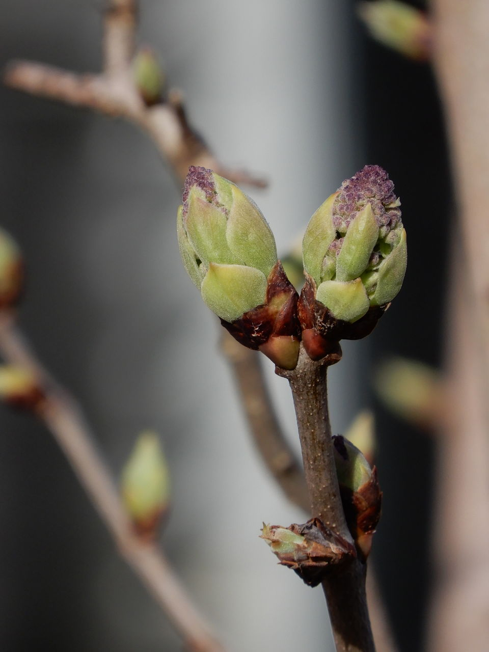 plant, growth, close-up, beginnings, focus on foreground, bud, new life, flower, no people, day, nature, beauty in nature, fragility, freshness, selective focus, branch, vulnerability, plant stem, twig, flowering plant, outdoors, spring