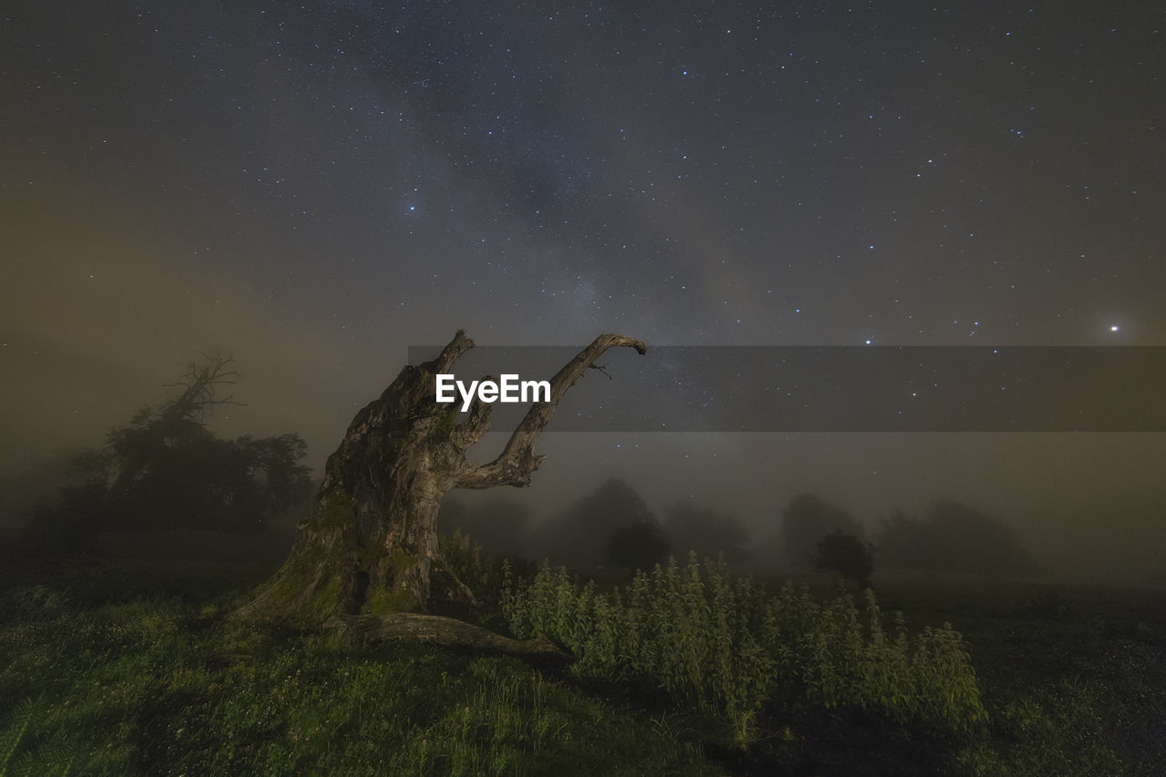 Plants Growing On Landscape Against Star Field At Night