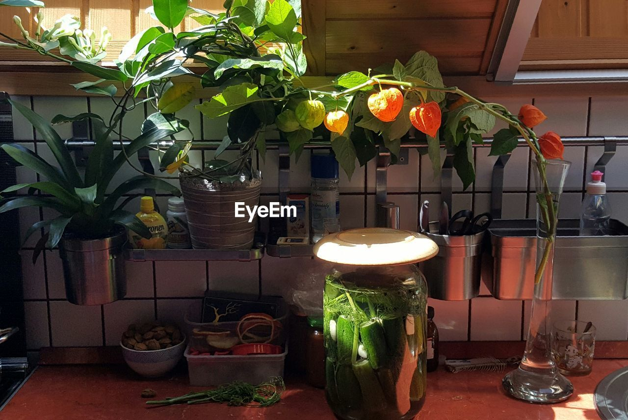 potted plant, plant, growth, indoors, leaf, table, no people, flower, day, food, freshness