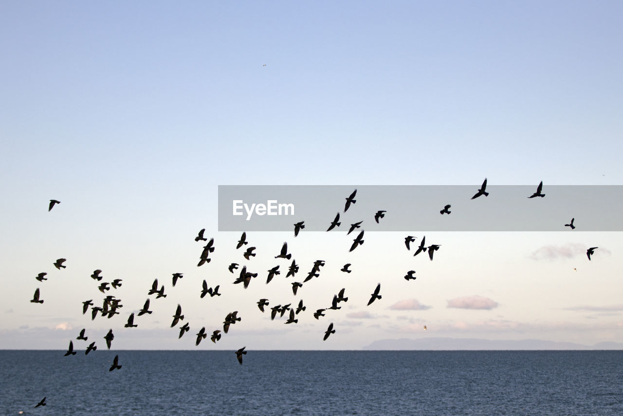 sky, animal wildlife, bird, animal, animal themes, flying, large group of animals, animals in the wild, group of animals, vertebrate, flock of birds, sea, beauty in nature, horizon, horizon over water, clear sky, nature, scenics - nature, mid-air, water, no people