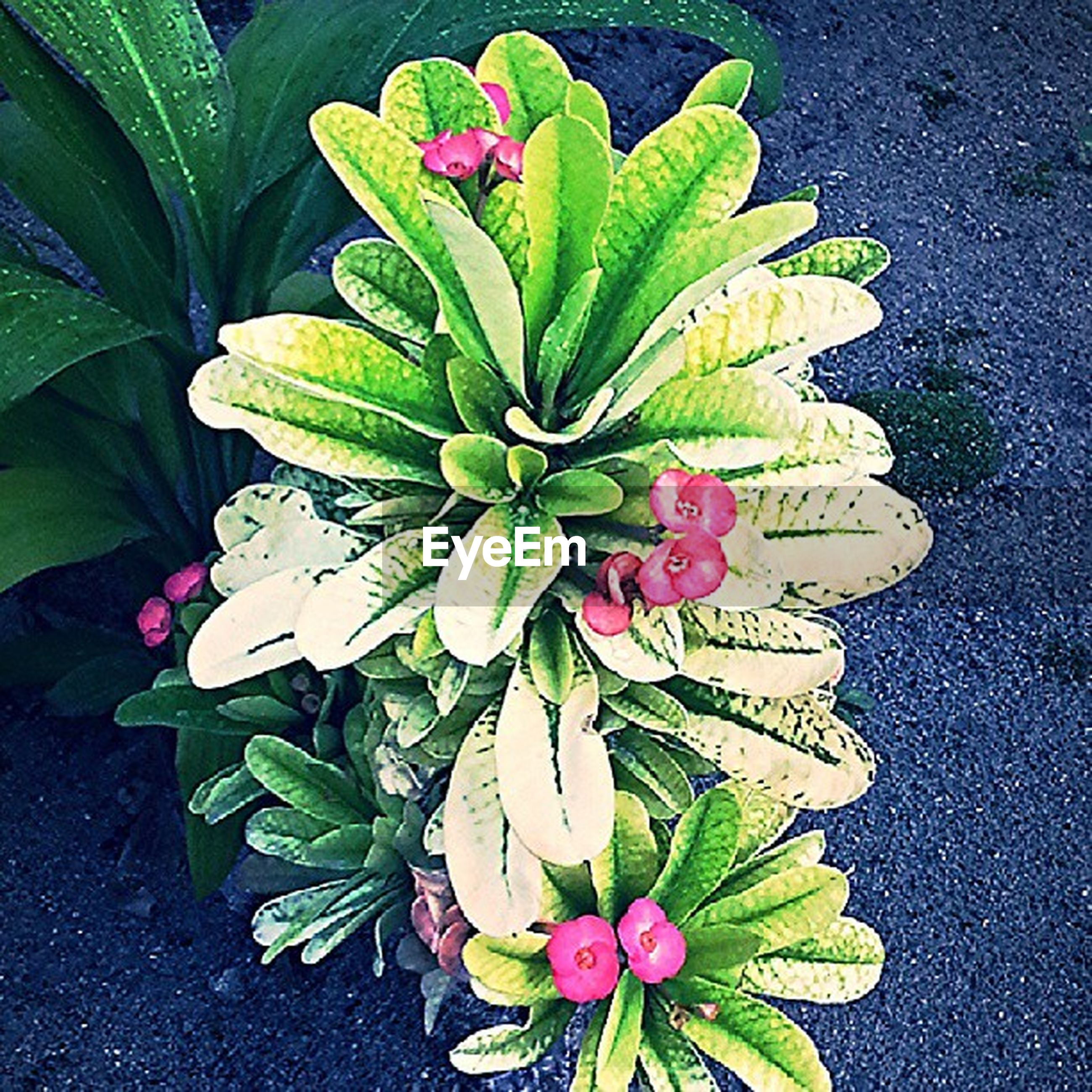 flower, leaf, freshness, growth, fragility, petal, plant, high angle view, flower head, beauty in nature, nature, green color, close-up, blooming, in bloom, potted plant, botany, no people, directly above, water