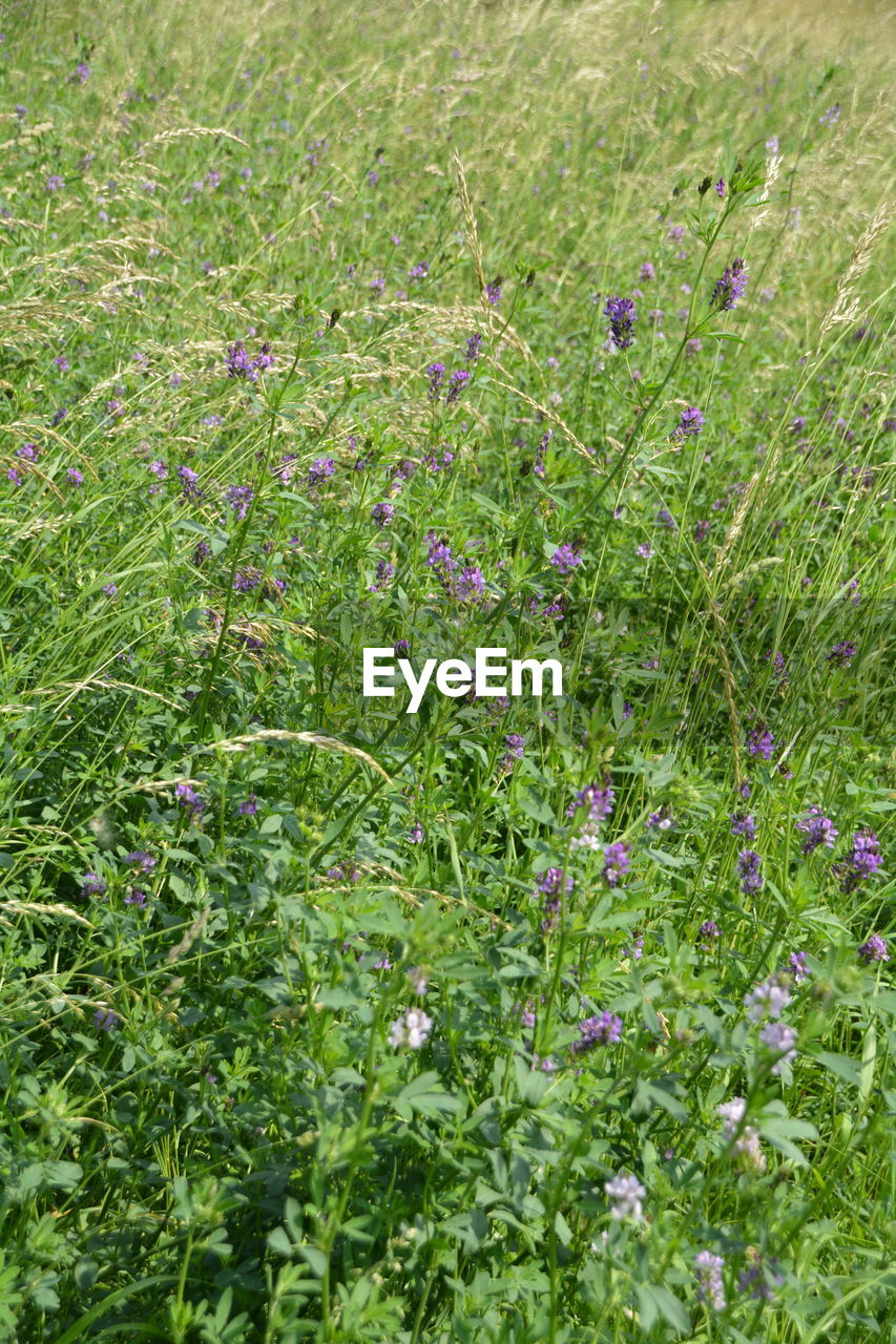 grass, green color, nature, growth, plant, field, outdoors, no people, flower, day, beauty in nature, freshness, close-up, fragility