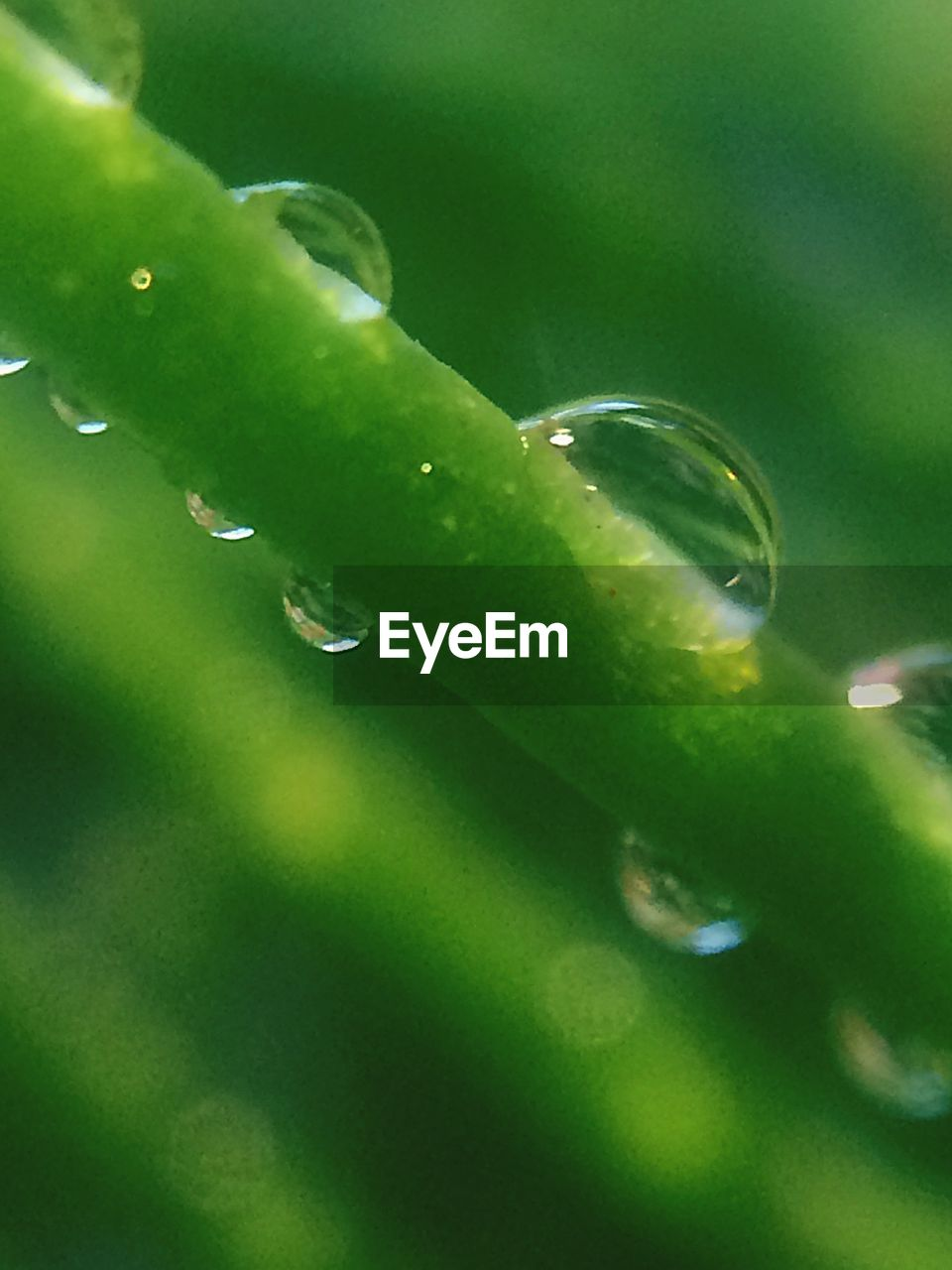 green color, drop, nature, growth, plant, close-up, freshness, leaf, beauty in nature, aloe, selective focus, water, wet, no people, purity, day, outdoors, herbal medicine, fragility