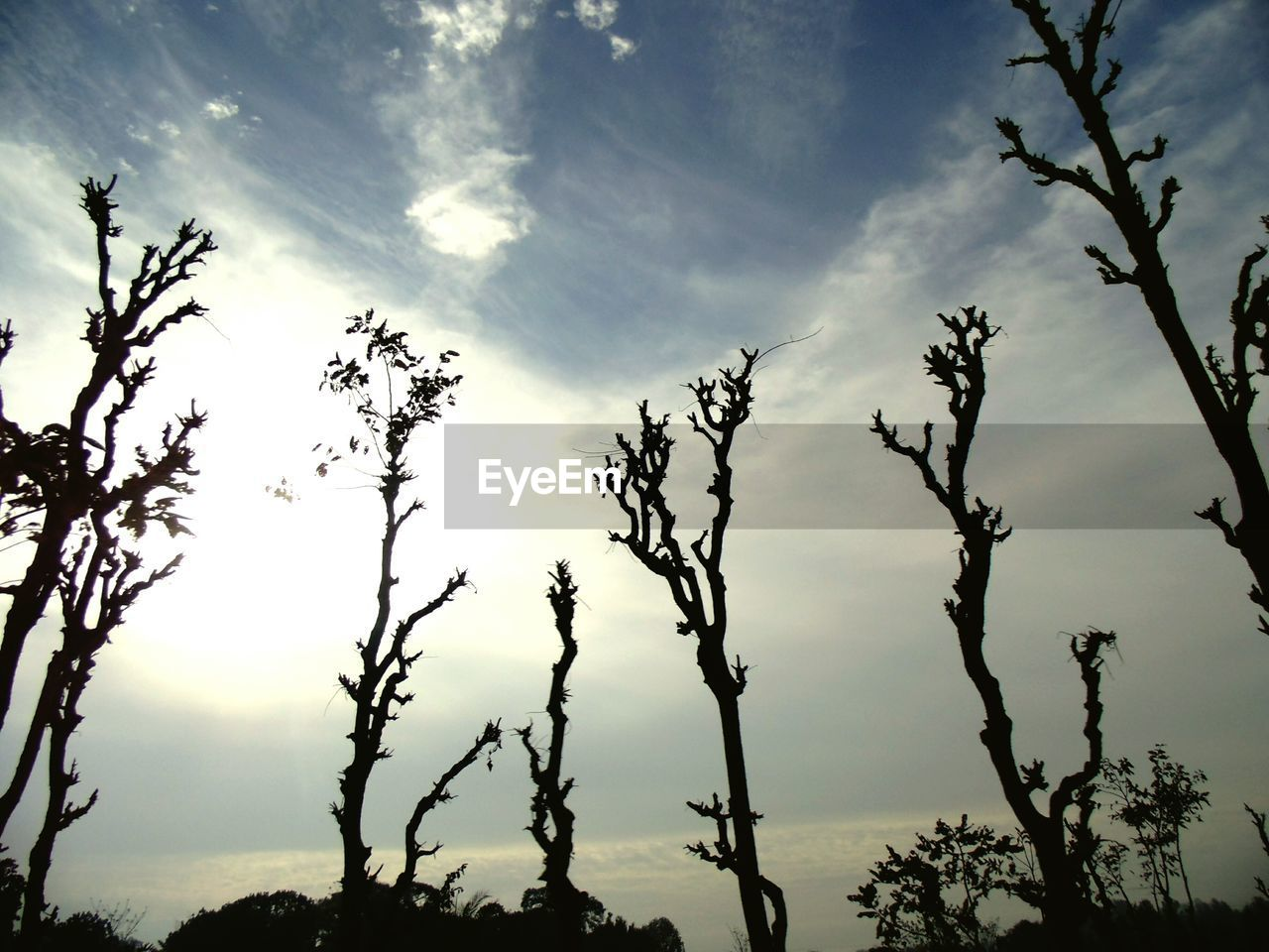 tree, nature, sky, tranquility, low angle view, no people, beauty in nature, outdoors, branch, scenics, growth, day