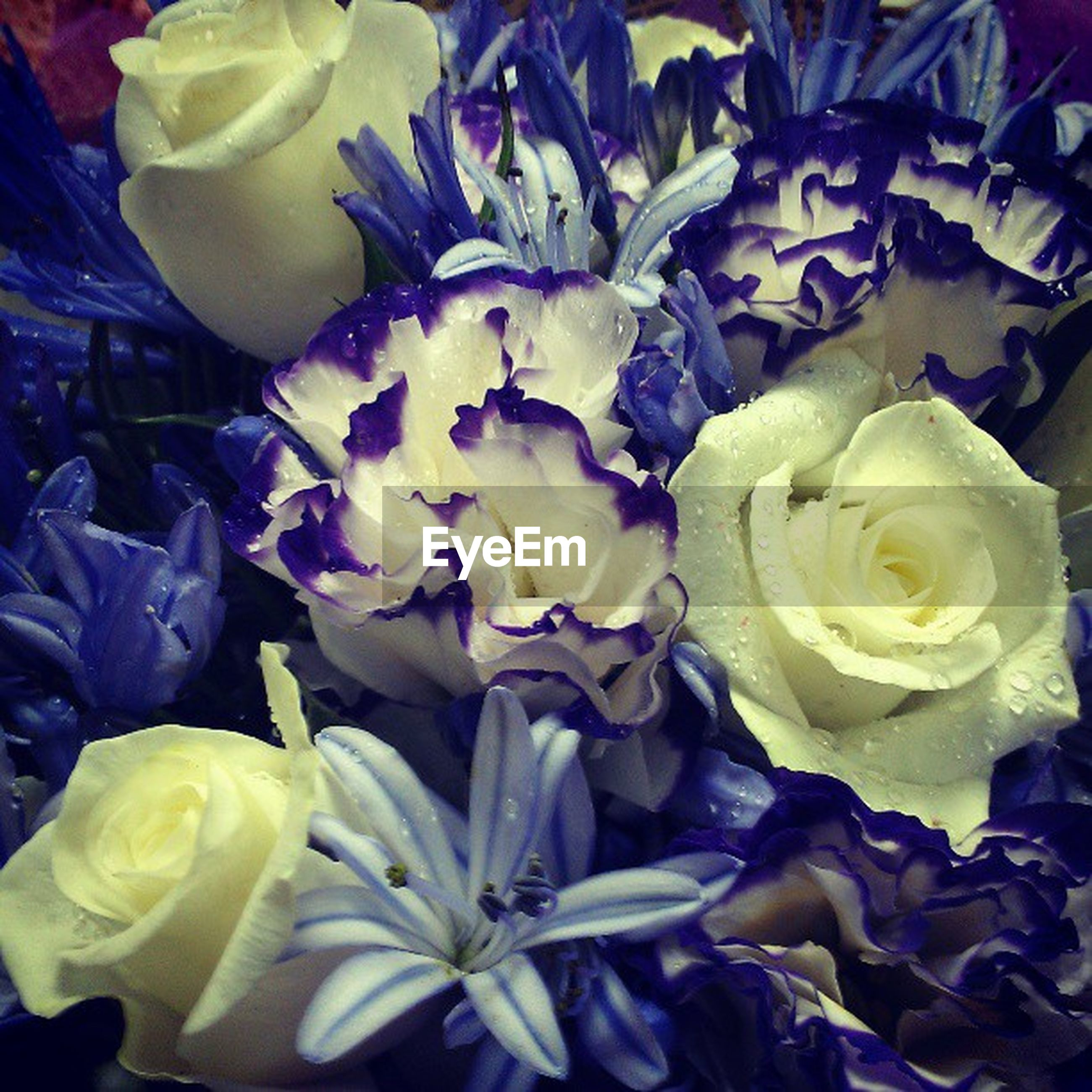 flower, freshness, petal, flower head, fragility, beauty in nature, indoors, rose - flower, high angle view, close-up, full frame, nature, backgrounds, yellow, growth, blooming, plant, no people, bouquet, bunch of flowers