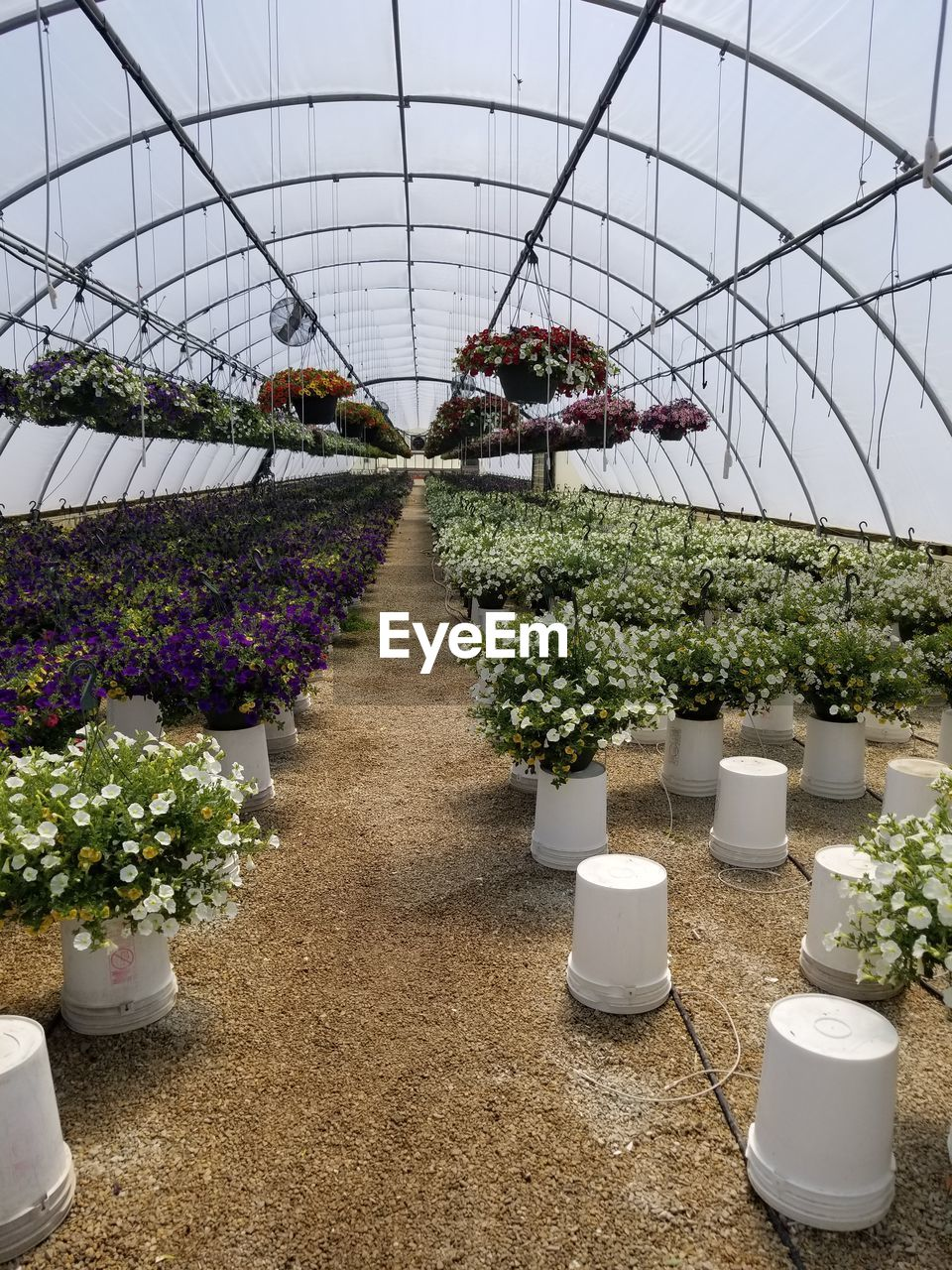 plant, greenhouse, growth, flowering plant, plant nursery, flower, nature, botany, no people, beauty in nature, potted plant, day, indoors, in a row, agriculture, freshness, flower pot, arrangement, vulnerability, ceiling, gardening, purple