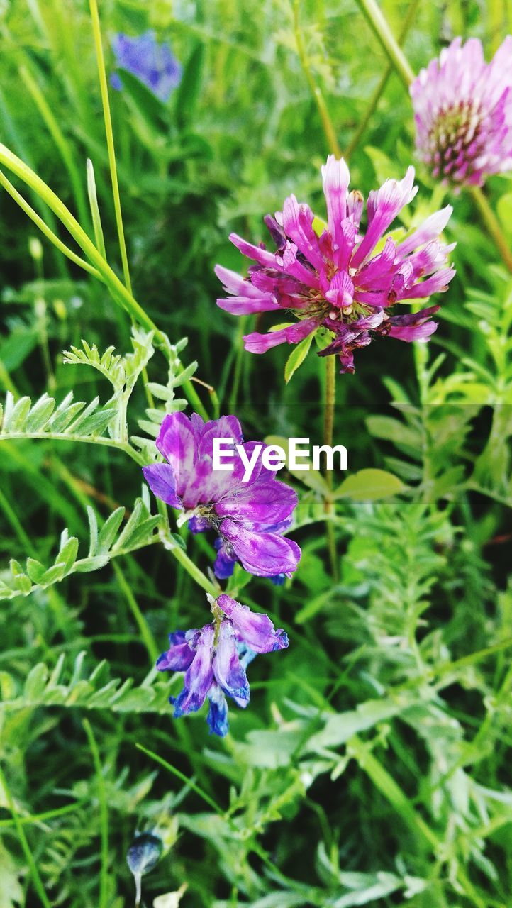 flower, purple, nature, beauty in nature, growth, fragility, day, plant, green color, no people, outdoors, petal, freshness, flower head, blooming, close-up
